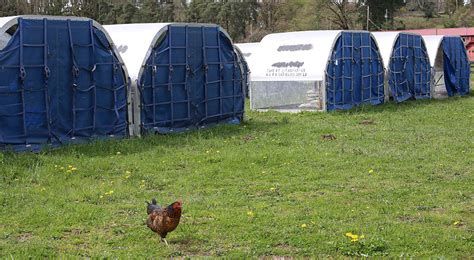 cargo igloos have new life as livestock houses garden