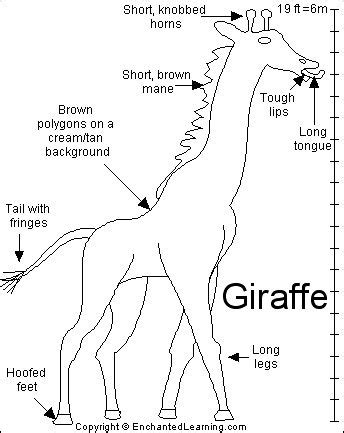giraffe habitat coloring pages 53 best giraffes images on pinterest giraffes giraffe