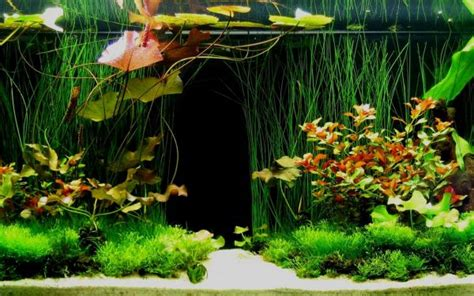 photo decoration aquarium tropical