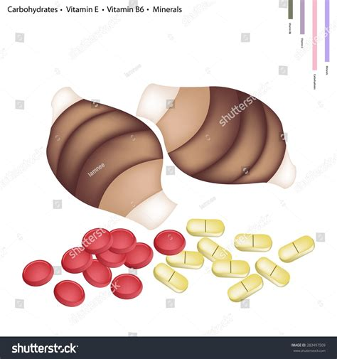 vitamin b carbohydrates healthcare concept illustration of taro root with
