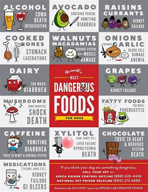 foods dogs shouldn t eat dogs should not eat these foods read