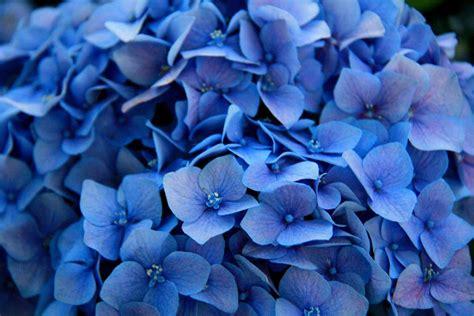 blue wallpaper hd tumblr photo pretty blue flowers tumblr collection cute flower