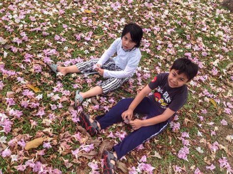 Kl Korean Wrapping Wrapping Bunga kedah alami musim bunga bagai di korea jepun subhanallah memang cantik sangat