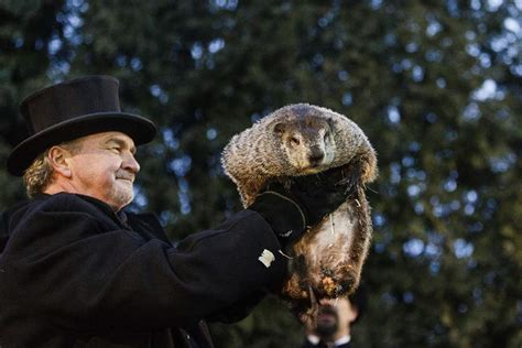 groundhog day phil pennsylvania groundhog s handlers phil predicts more