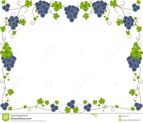 imagenes de uvas vector marco de la uva imagen de archivo imagen 16247371
