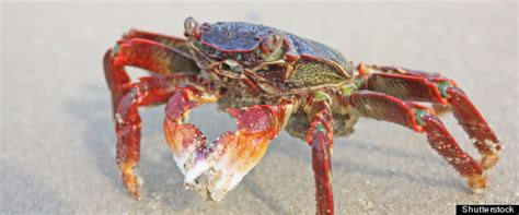 fairfax crab house douglas allen fairfax pleads guilty to theft used maryland gov t credit cards to buy