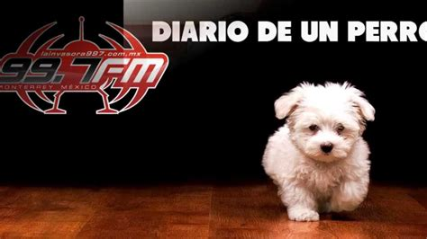 diario de un emigrante 8423342425 reflexi 243 n diario de un perro voz tom 225 s valdez funnycat tv