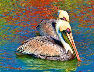 pelicans colors color my pelicans digital by valle