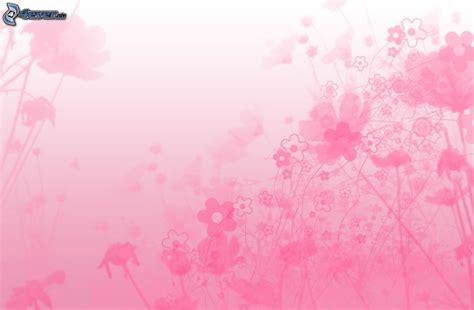 imagenes de color rosa wallpapers fondo de color rosa