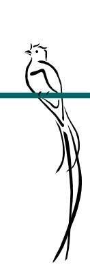 tribal quetzal tattoo resultado de imagen para dibujos del quetzal aves