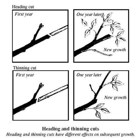 how to trim trees pruning shrubs a guide to successful pruning