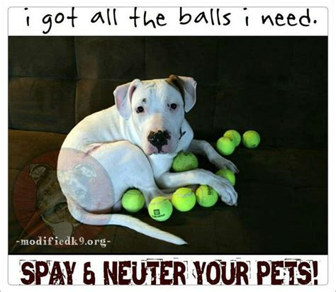 average cost to spay a reasons to spay neuter project petsproject pets