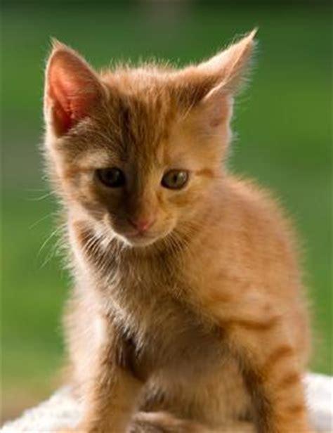Tabby Cats   LoveToKnow