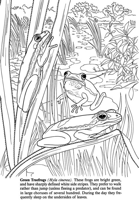 free coloring pages pond animals welcome to dover publications