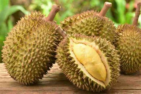 jual bibit durian bawor wwwnayyaproperticom