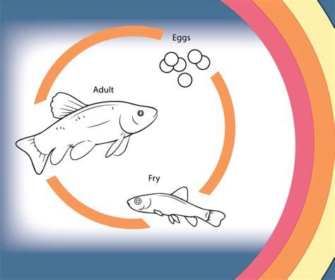 fish for life a hatchery life cycle fish life cycle mollusk life cycle