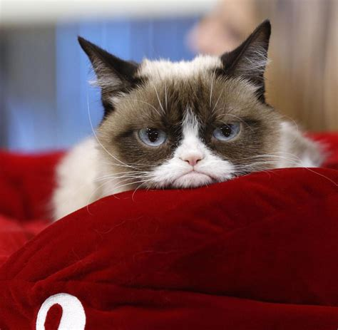 Home Design Blogs 2014 verkaufsschlager schlechte laune katze grumpy cat wird tv