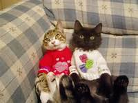 Extremely Cute Valentines Day Animals  Funny And