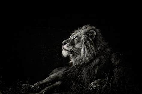 imagenes de animales en blanco y negro fotos de animales en blanco y negro taringa
