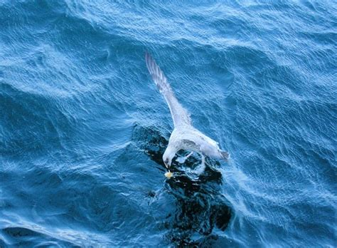 gabbiano sul mare gabbiano sul mare presso b 252 y 252 kada turchia viaggi