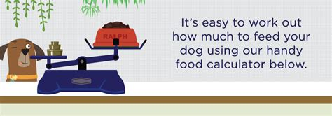 puppy food calculator puppy food amount calculator 28 images dogs nutrition
