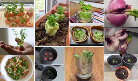 good home design 16 kitchen scraps 15 vegetables magically regrow from kitchen scraps