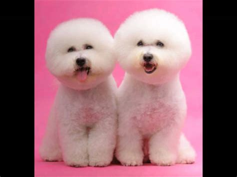 cutest breed in the world cutest dogs breeds in the world and cutest pics for cutest dogs names ideas and