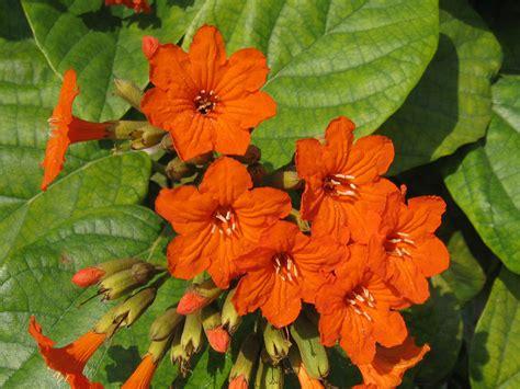 fiori esotici immagini sfondi per lo schermo fiori esotici