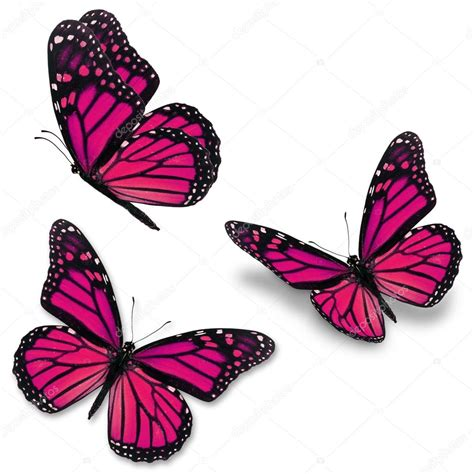 pink monarch butterfly stock photo 169 thawats 78348056