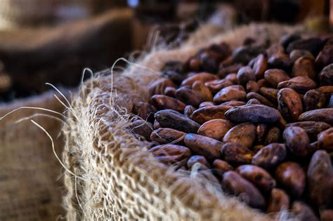 In Law Pods fight flu with cacao the antioxidant rich superfood
