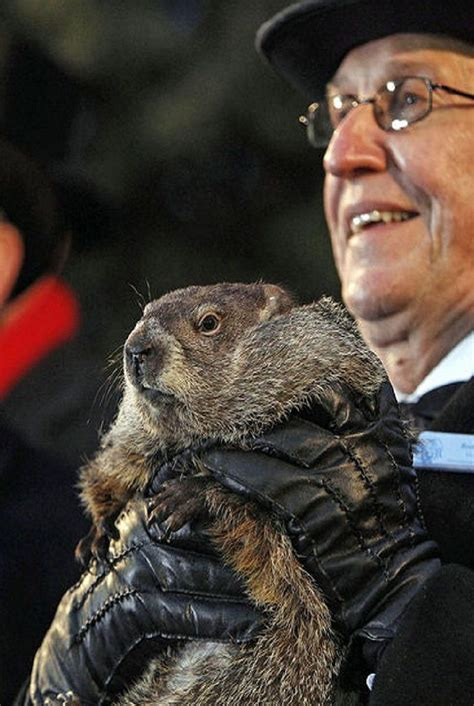 groundhog day questions 1000 images about groundhog day activity ideas for