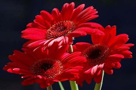 types of reds pictures of red flowers www pixshark com images