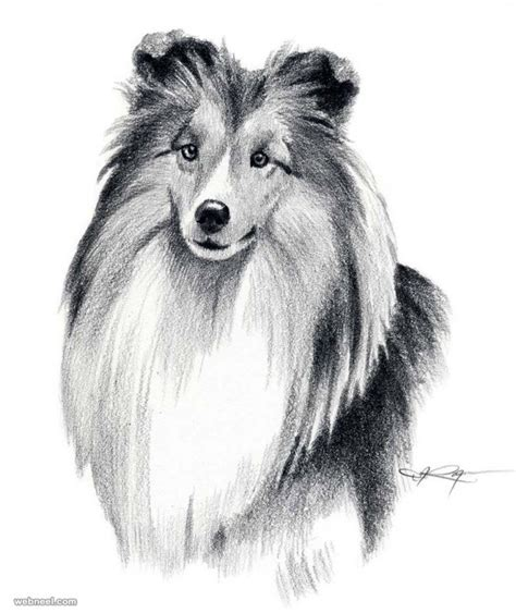Drawings Of Dogs