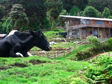 costa rica house build joshua expeditions idolza costa rica adventure travel ultimate eco immersion with