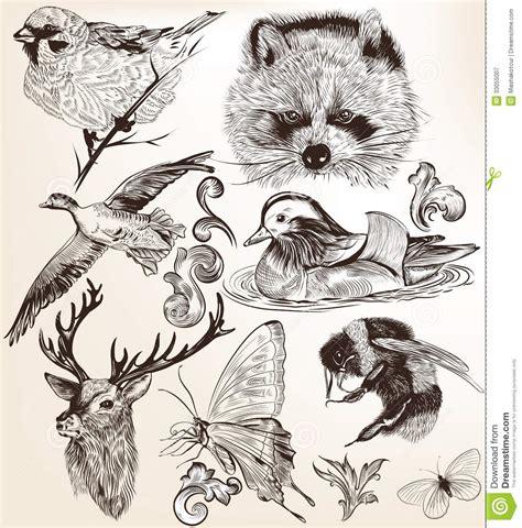 imagenes vintage animales vektorsatz ausf 252 hrliche hand gezeichnete tiere in der
