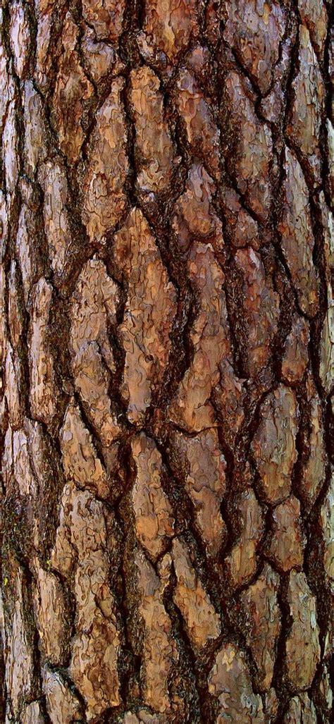 how to paint tree bark texture the world s catalog of ideas
