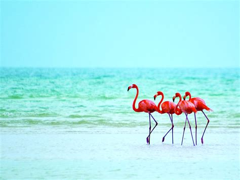 Discover Holbox Island a unique Caribbean experience