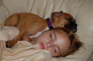 Precious snuggle baby boxer puppy boxer pinterest