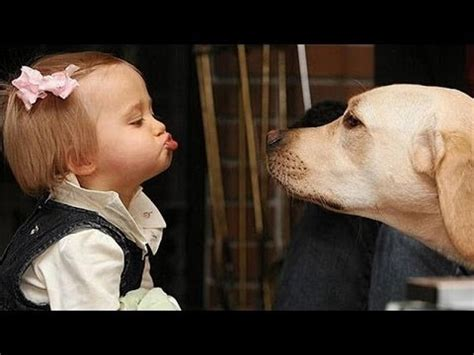cute dogs and adorable babies compilation youtube funny dogs and babies talking cute dog baby