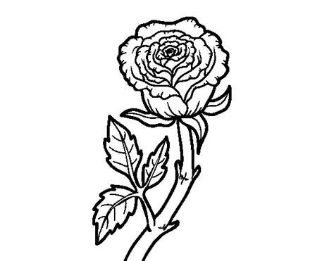 imagenes de rosas sin pintar dibujo de rosa silvestre para colorear dibujos net
