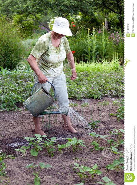 Is Working In The Garden by Senior Working In Garden Stock Photography Image
