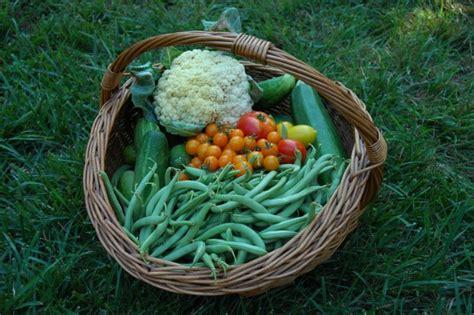 Garden Harvest Basket by Garden Harvest Basket Farm Folly