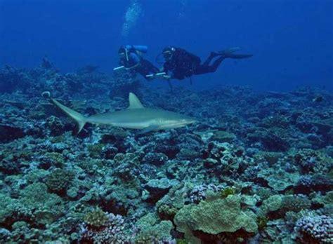 imagenes de la vida marina vida marina puerto pe 241 asco
