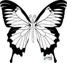 butterfly net coloring page download
