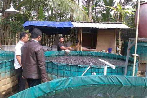Kolam Besar Praktis Dan Murah 9 langkah cara mudah budidaya ikan lele di kolam terpal bagi pemula