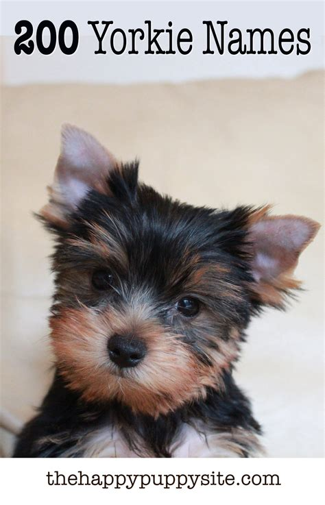 names for a yorkie yorkie names 200 amazing ideas for naming terriers