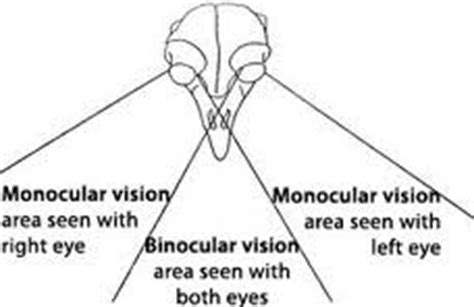 monocular vision definition lesson quiz study com