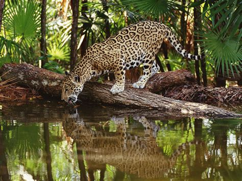 belize caribbean cayes wildlife and mayan