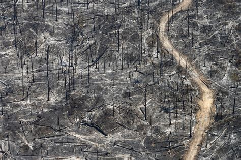 fireplace der chain photo story aerial images of deforestation in the