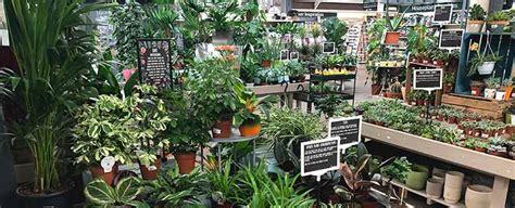 house plants  good   health burston